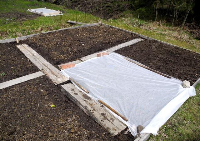 Här har jag petat ner rädisor, sallat och majrova. I år tänker jag inte så allt samtidigt. Det har varje sommar slutat med att vi hetsäter grönsaker i två veckor – sen är allt visset.  Det är inte en fiberduk som ligger på jorden – utan gardinen Lill från Ikea! Ett tips jag fått från bloggen Skillnadens trädgård.