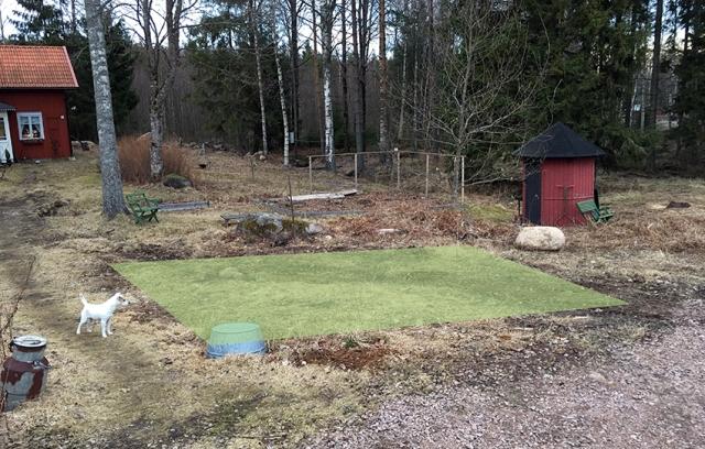 Här har jag markerat, med grönt, ytan där odlingslådorna ska stå. Området är cirka 25-30 kvadratmeter. Den uppochnervända baljan täcker ett hål där vi ska ha en av stolparna till en blivande grind.