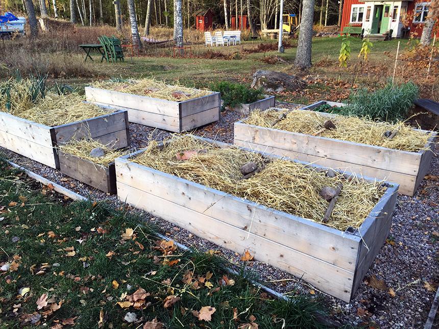 Innan vintern kom täckte jag jorden i lådorna med halm. Den kommer jag plocka bort när det är dags att så igen till våren. I lådan längst bort till vänster höstsådde jag morot, spenat och vitlök. Ska bli spännande att se om de fröna gror till våren.